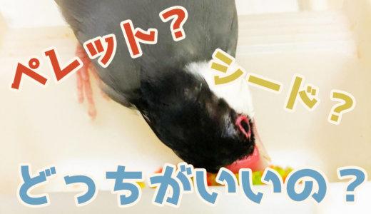 【鳥・インコの餌】ペレットとシードの比較(メリットとデメリット)