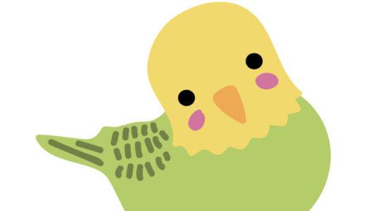 迷子の鳥を保護したら