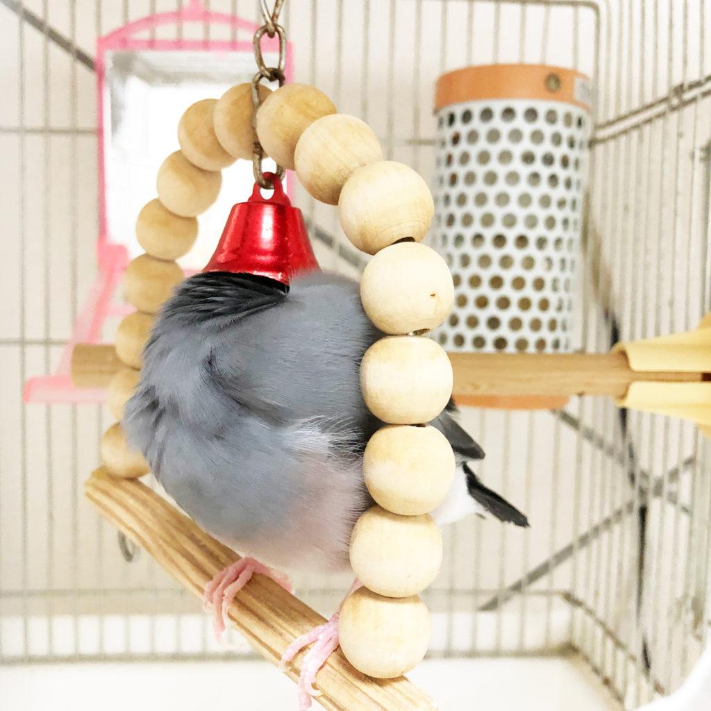 ブランコで眠る文鳥