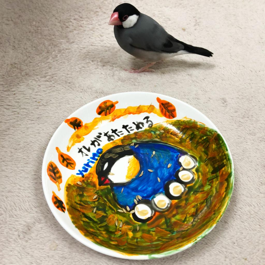 やまゆりのさんのお皿に近づく文鳥のラムネくん