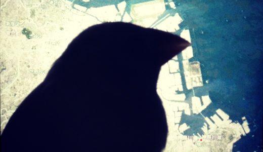 インコなどの鳥を迷子にさせてしまったら