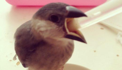 鳥を飼うデメリット
