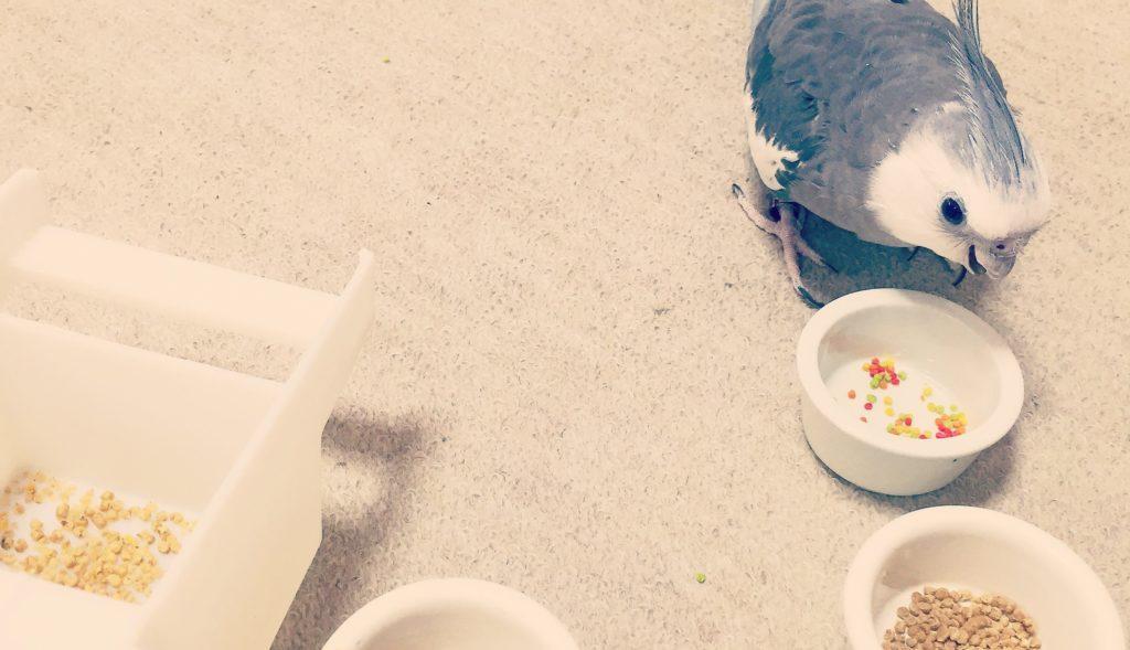 鳥 ペレット