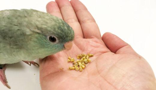 【サザナミインコの飼い方】餌について:成鳥の場合(ペレットとシードの比較)