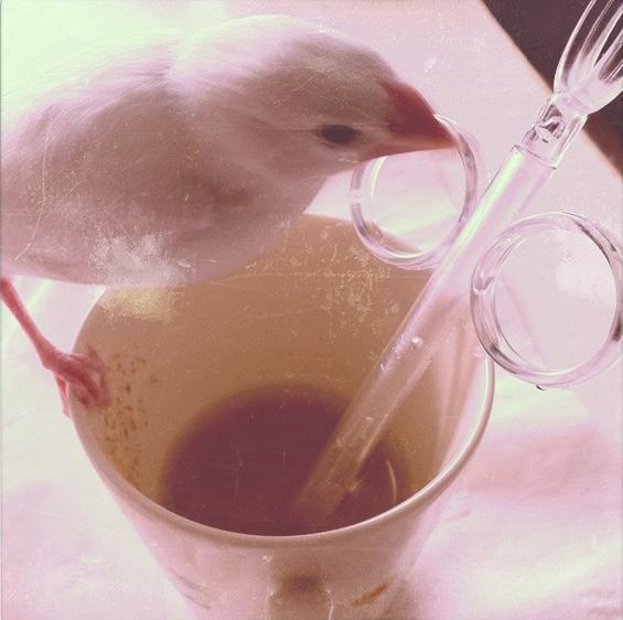 挿し餌を終えた文鳥のチロルちゃん