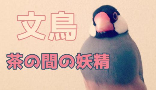文鳥ってどんな鳥?【性格・鳴き声・寿命・魅力】