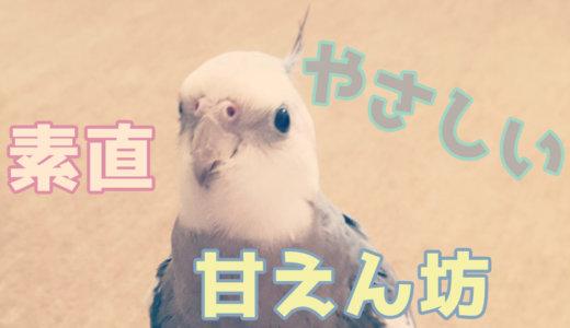 オカメインコってどんな鳥?【体重・性格・鳴き声・寿命】
