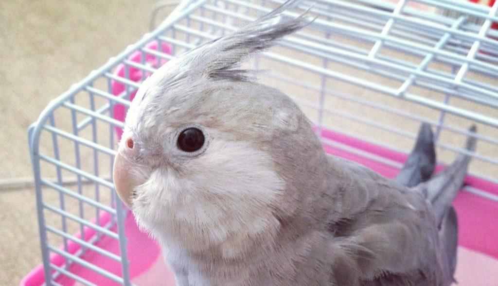 ペット ショップ 鳥 専門 店