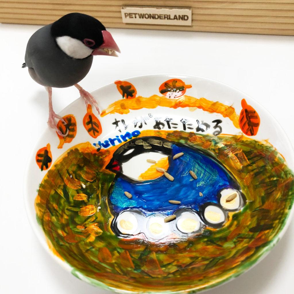 オーツ麦を食べる文鳥のラムネくん