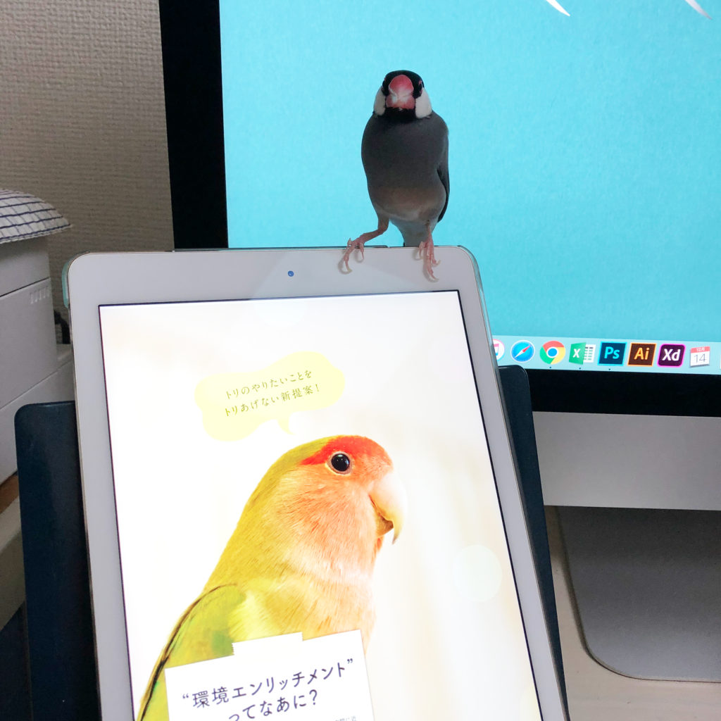 iPadに乗る文鳥のラムネくん