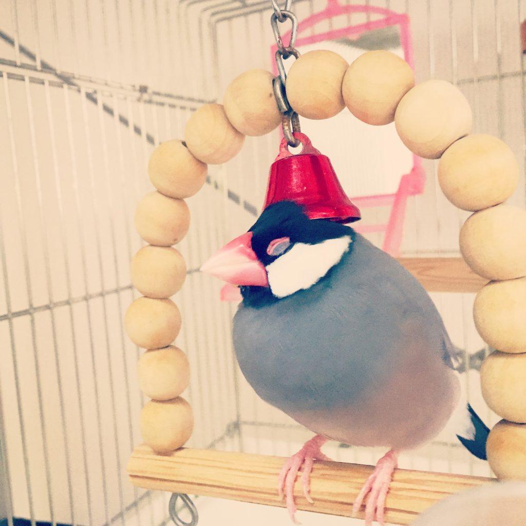 ブランコの鈴が後頭部に突き刺さっている文鳥のラムネくん