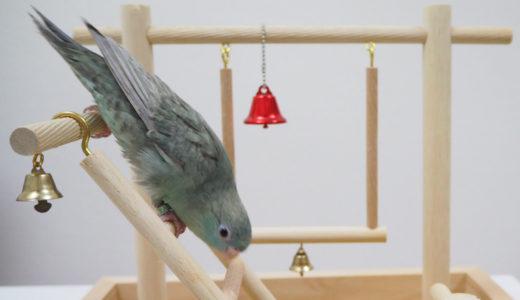 【放鳥】飼い鳥の運動不足を解消する方法【バードアスレチック】