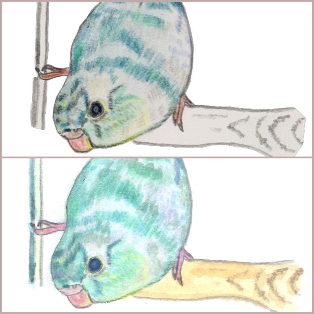 水彩色鉛筆で仕上げる前と仕上げた後の比較