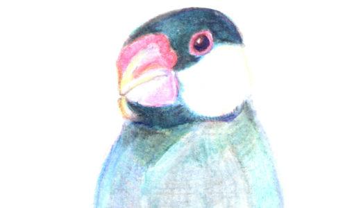 恋人は「鳥の目に映る鳥の世界」を描く