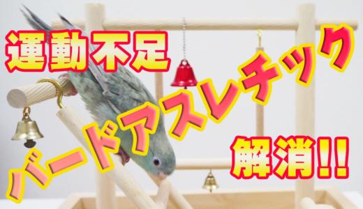 【運動不足】飼い鳥の肥満を解消する方法【バードアスレチック】