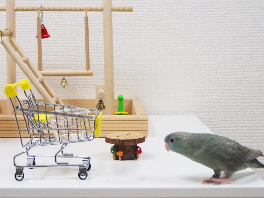 おもちゃのショッピングカートを見つめるサザナミインコのなすびくん