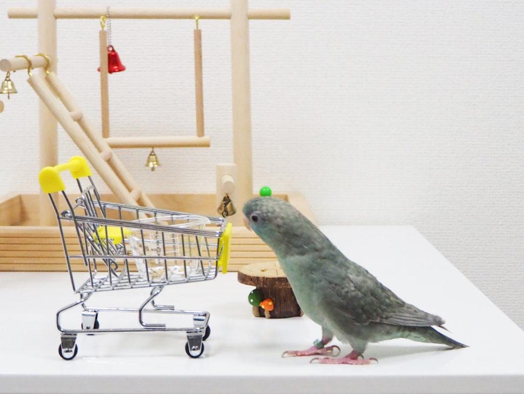 おもちゃのショッピングカートにずんずんと近づくサザナミインコのなすびくん