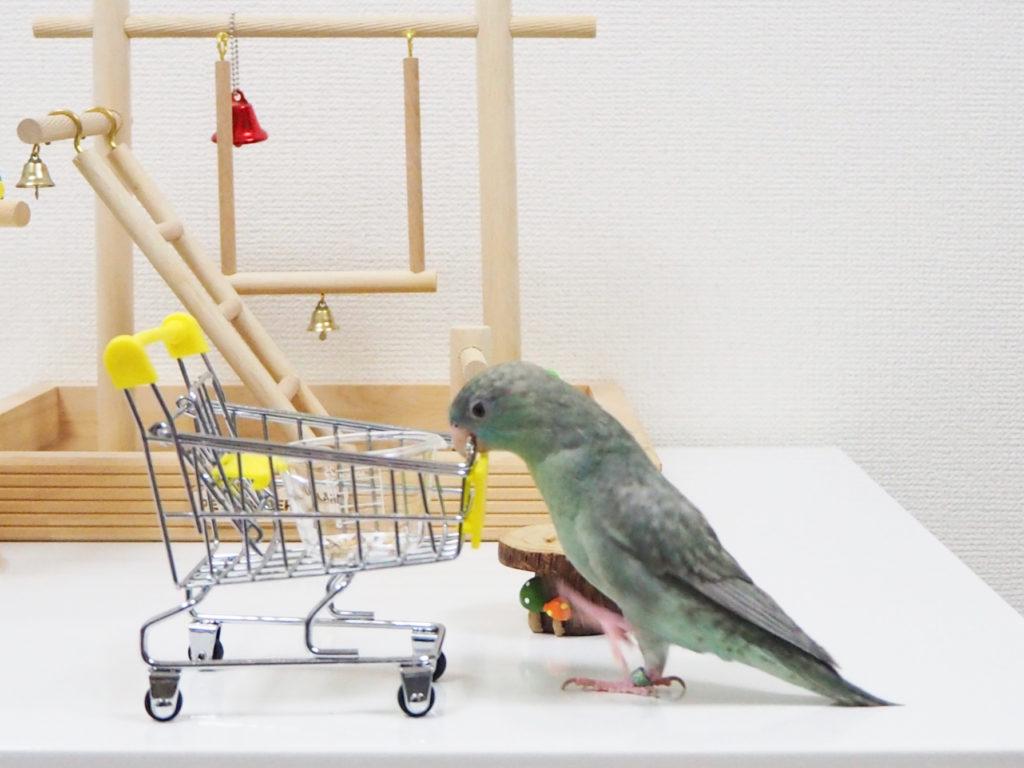 おもちゃのショッピングカートに脚を掛けて乗ろうとするサザナミインコのなすびくん