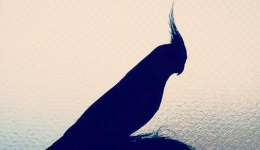 「ながら放鳥」には危険がいっぱい