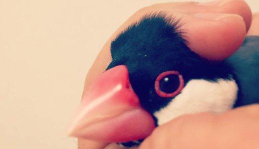 【アンケート結果】みなさんの愛鳥はどんな香り(匂い)がしますか??