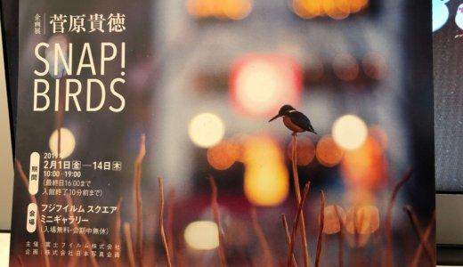 写真家・菅原貴徳 さんの「SNAP! BIRDS」へ行ってきたよ!