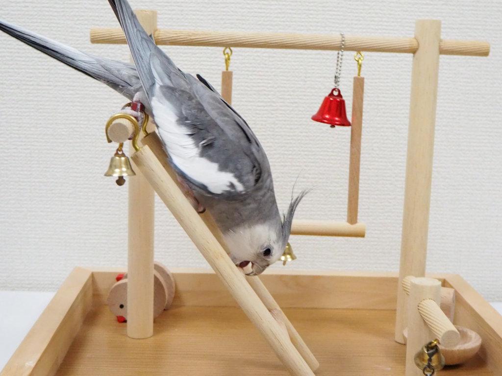 バードアスレチックのはしごを降りるオカメインコのポテトくん