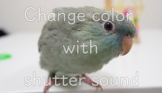 Change color with shutter sound【サザナミインコ】