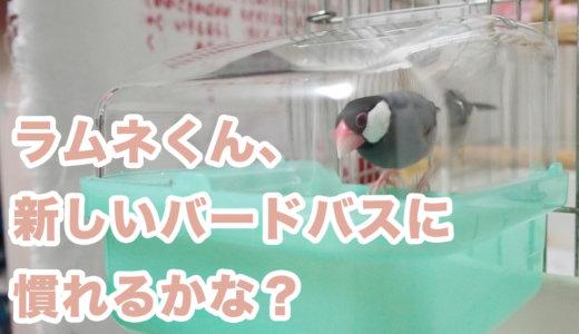 【文鳥】ラムネくん、新しいバードバスに慣れるかな?【水浴び器】