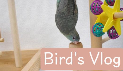 放鳥日記〜Bird's Vlog〜
