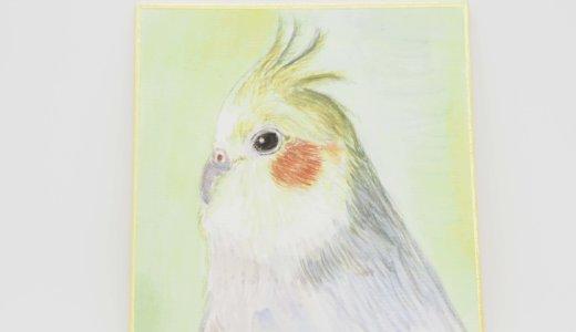 【プレゼント企画】あなたの愛鳥を描きます!