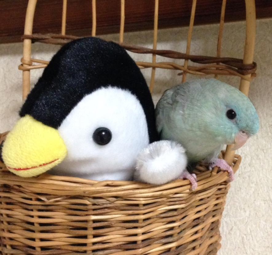 サザナミインコとペンギンさん