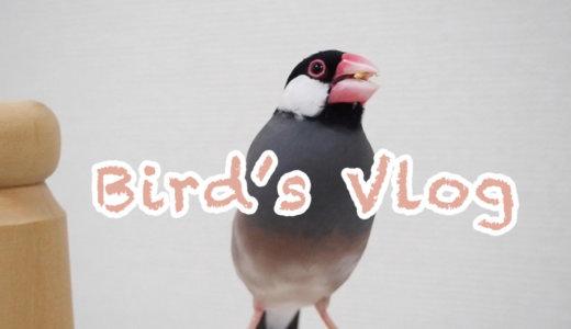 〜Bird's Vlog〜