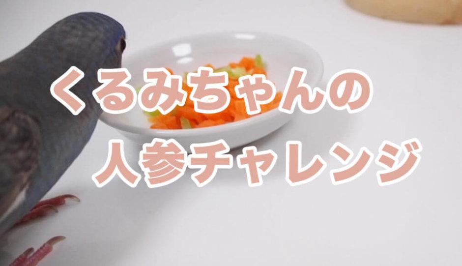 細かく刻んだ人参と小松菜を眺めているサザナミインコのくるみちゃん