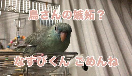【鳥さんの嫉妬?】なすびくん、ごめんね