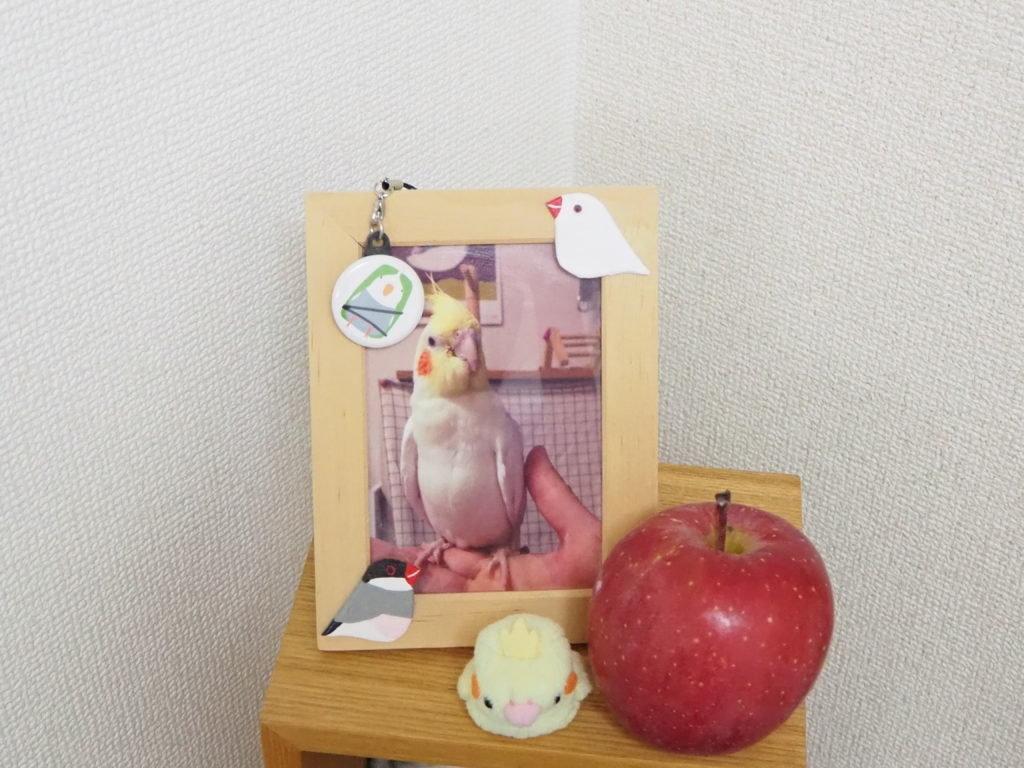オカメインコのリンゴくんの遺影と果物のりんご