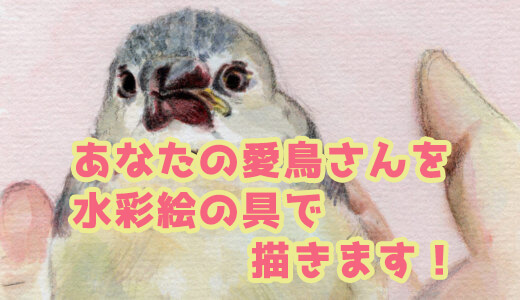 【いろどり屋】あなたの愛鳥さんを水彩絵の具で描きます!