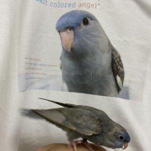 自分がデザインされたTシャツだと知り、テンションが上がるサザナミインコのくるみちゃん