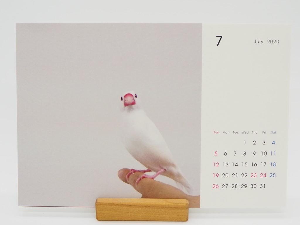TOLOT卓上カレンダー(文鳥のチロルちゃん)