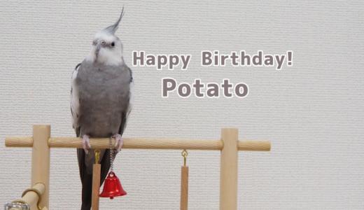 【7歳】ポテトくんお誕生日おめでとう!