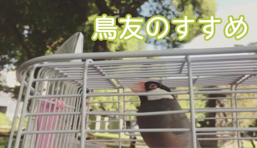 鳥友のすすめ