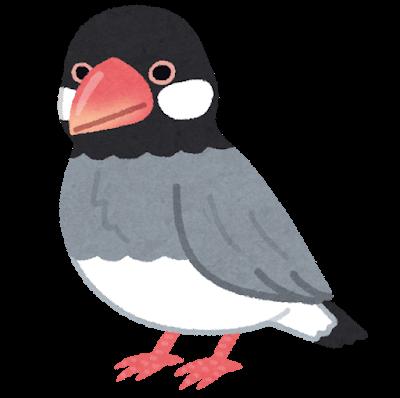桜文鳥のイラスト