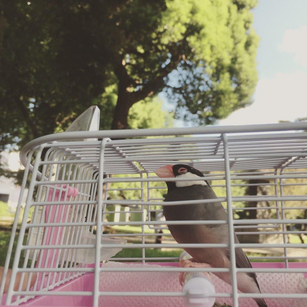 鳥友さんと公園にて。文鳥のラムネくんを連れて。