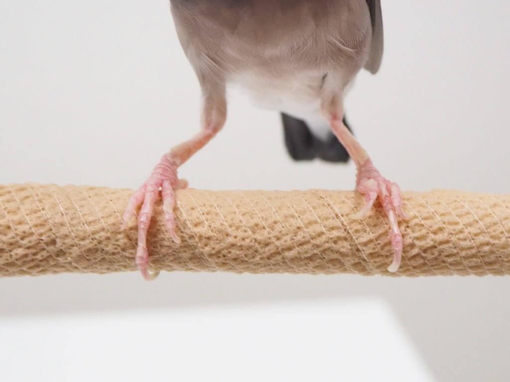 自着性テープを巻いた止まり木に乗っている文鳥のラムネくん