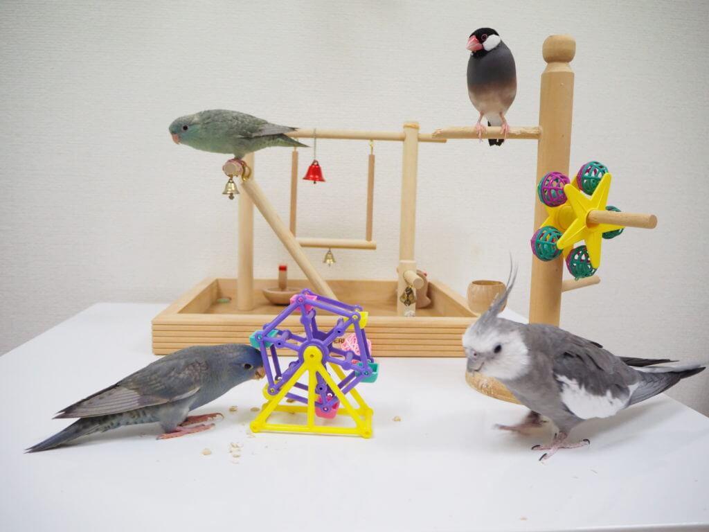 文鳥のラムネくん、オカメインコのポテトくん、サザナミインコのなすびくんとくるみちゃんが同じテーブルの上で遊んでいる。