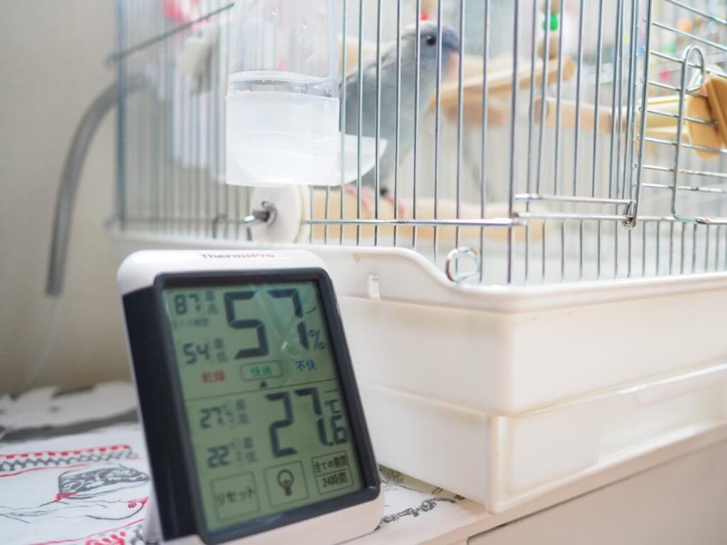 温度計とサザナミインコのくるみちゃん