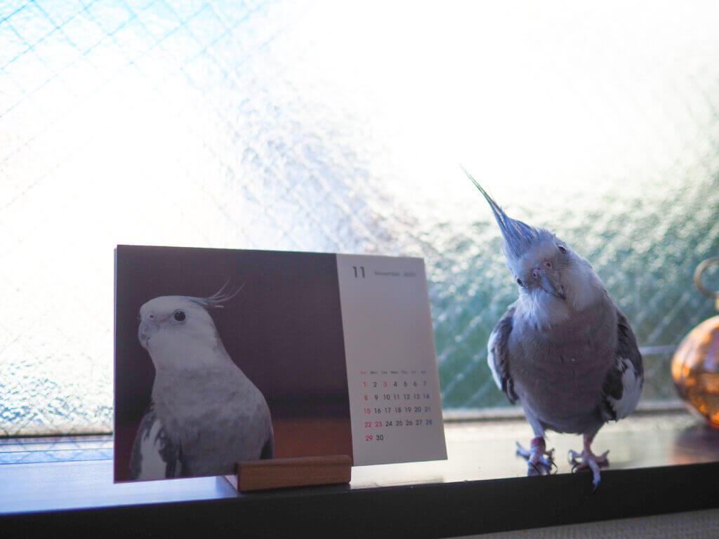 オカメインコのポテトくんと鳥さんカレンダー