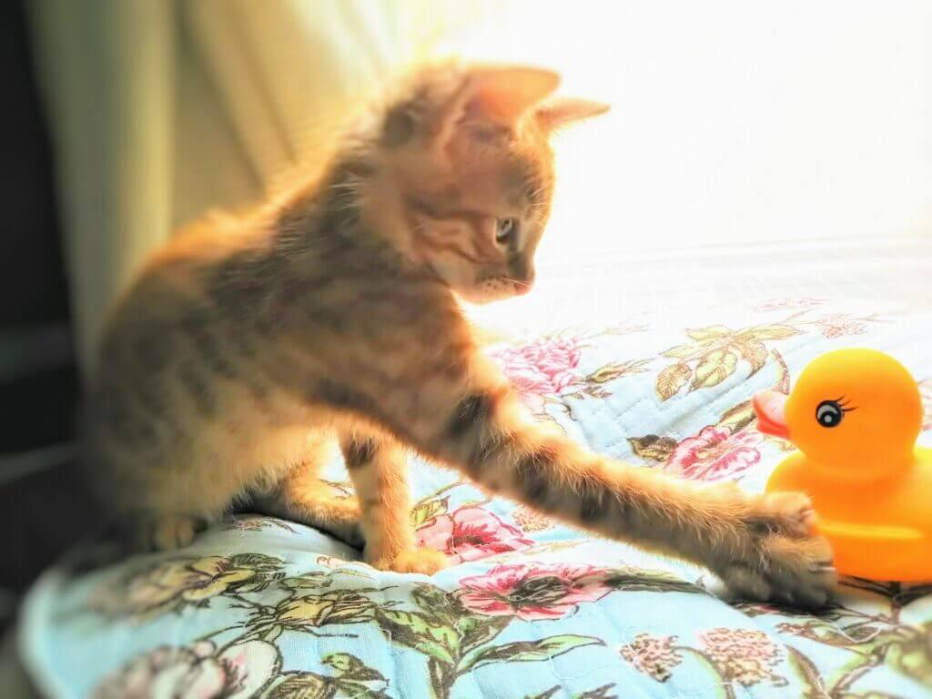 猫とアヒルの人形